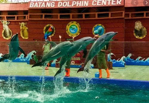 Wisata Batang : Batang Dolphin Center (BDC), Taman Safari Mini